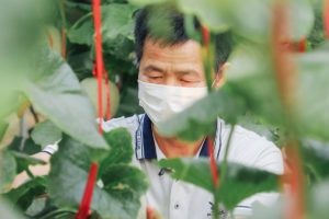 APAC News Chinese Farmer preparing produce for sale on Taobao platform